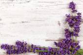Lavender background. — Stock Photo