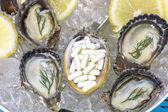 Zinc capsule supplementary  food oyster seafood lemon — Stock Photo