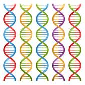 Set of DNA symbols for science and medicine. Vector design. — Stock Vector