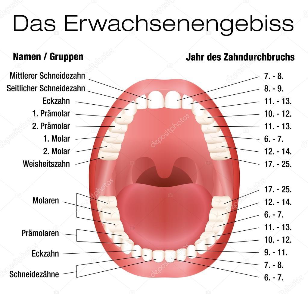 Eruption Deutsch