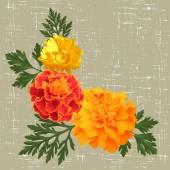 Marigolds — Stock Vector