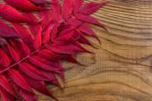 Beautiful autumn composition on wooden background — Stock Photo