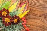 Bella composición otoño sobre fondo de madera — Foto de Stock
