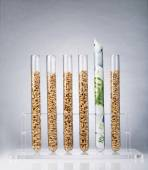 Genetically modified seeds costs — Stock Photo