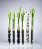 Genetically modified plants costs — Stock Photo
