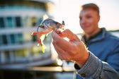 Adam gösteren balık yakalayan — Stok fotoğraf