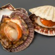 Fresh open shell scallops on gray background — Stock Photo #60349685