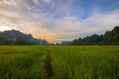 Landscape. Mountain with green rice field during sunset in Phits — Foto de Stock