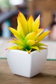Flower blossom in pots — Stock Photo