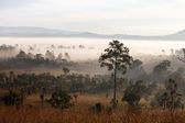 Misty morning sunrise in mountain at Thung Salang Luang National — Stock Photo