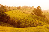 Green Terraced Rice Field during sunset at Ban Pa Bong Peay in C — Stock Photo