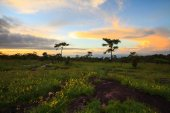 Landscape sunset and flowers at Phu Hin Rong Kla National Park,P — Stock Photo