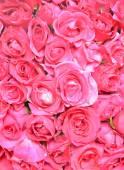 Pink rose flowers background — Foto de Stock