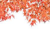 Close up autumn background isolated on white — Stock Photo