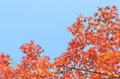 Autumn background over blue sky — Stock Photo