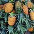 Fresh pineapples — Stock Photo #69294913