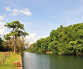 Idyllic scenery of forest tree and river — Stock Photo