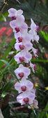 Orquídeas en el jardín botánico — Foto de Stock