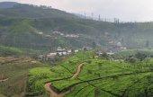 Landscape with tea plantations — Stock Photo