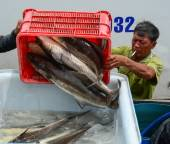 People working at a wholesale fish market — Stock Photo