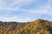 Landscape of autumn with mt. Siguniangshan — Stock Photo