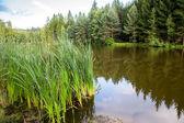 Pond — Stock Photo