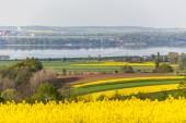 Colza field — Стоковое фото