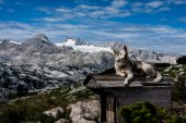 Dog on the roof — Stock Photo