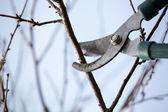 ножницы — Стоковое фото