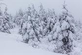 Invierno profundo — Foto de Stock
