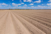 Rows on the field — Stock Photo