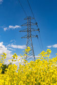 Powerlines on rape field — Stock Photo