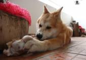 Dog and bone — Stock Photo