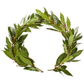 Laurel wreath close-up — Stock Photo