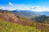 Spring in the mountains — Stockfoto