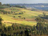エチオピアの農場 — ストック写真