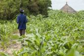 Millet farming in South Sudan — Stock Photo