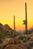 Sonoran desert at dawn — Stock Photo