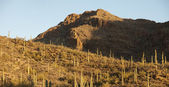 Panorama of sonoran desert — Stock Photo