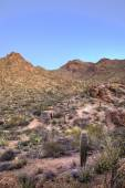 Hdr image of sonoran desert — Stock Photo
