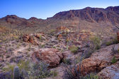Hdr of sonoran desert — Stock Photo