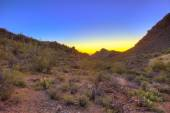 Sunrise over the sonoran desert — Stock Photo