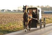 Amish cart — Stok fotoğraf