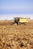 Combining corn — Stock Photo