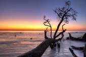 Driftwood and sunrise hdr — Stock Photo