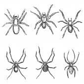 Sketch Spiders — Stockvektor