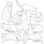 Sketch Cats — Stock Vector #57054403