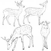 Sketch Dappled Deers — Stock Vector