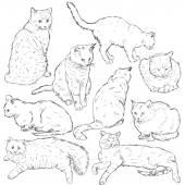 Skizze-Katzen — Stockvektor