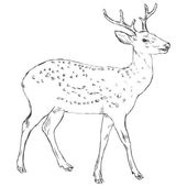 Sketch Dappled Deer — Stock Vector